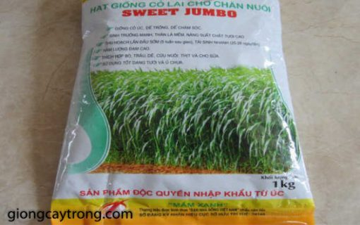 co-sweet-jumbo