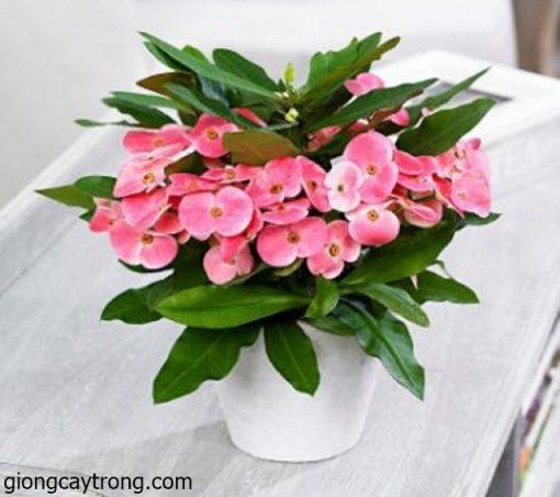 xuong-rong-bat-tien1