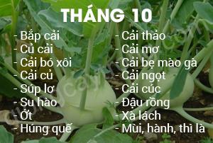 thang 10