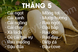 thang 5