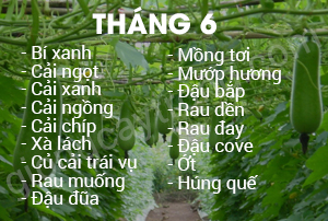 thang 6
