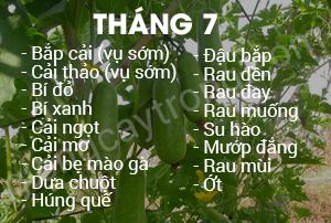 thang 7