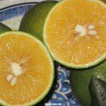 Quy trình chăm sóc cây cam Vinh