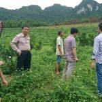 Hòa Bình. DA trồng 50ha mít Thái